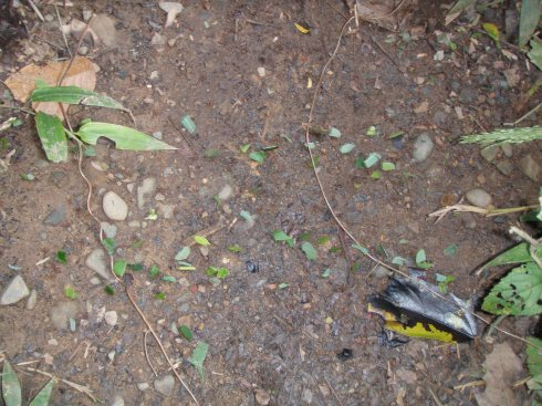 Leaf cutter ants, which may or may not be fertile.  No one knows for sure.